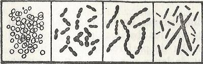 Biología Microbios bacterias 1 a 4