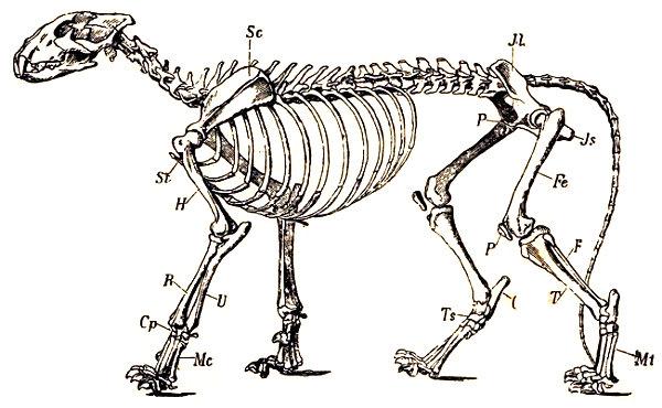 Mamiferos Vertebrados Zoología Historia Natural Aragón