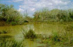 Galachos del Ebro 1